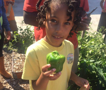 Kid holding a vegetable